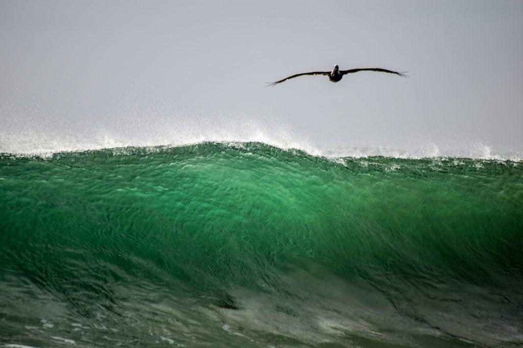 beautiful wave in bocas