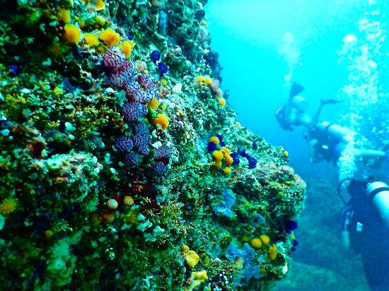 Tiger Rock is another great dive spot in bocas del toro.
