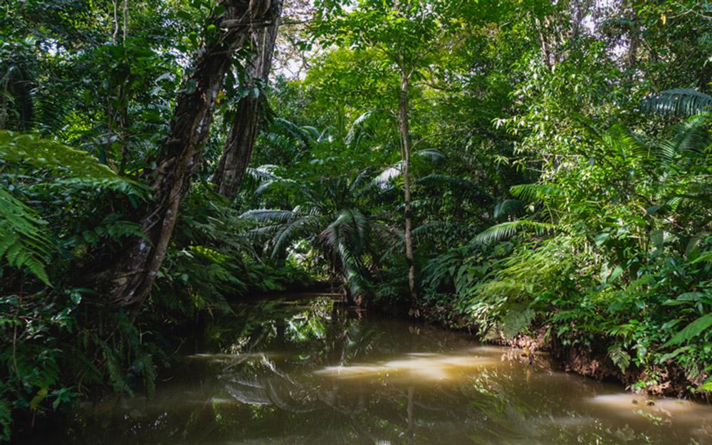 The Creek to Nivida Cave