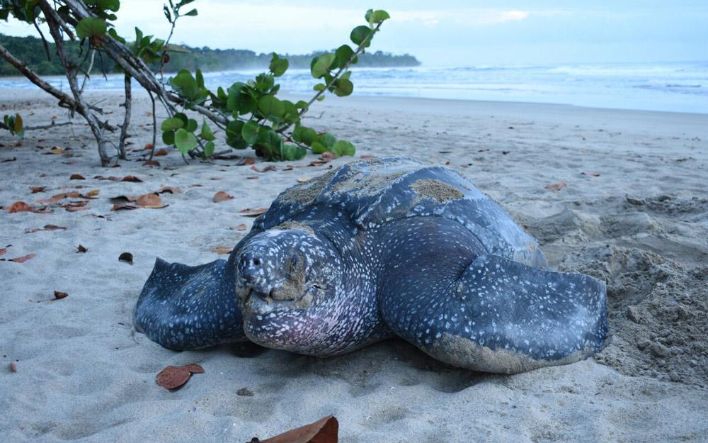 sea-turtle-conservancy